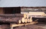 Злоумышленники вырубили в Хакасии 20 тысяч кубометров леса на 80 млн рублей