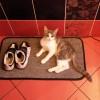 Электрический теплый коврик - сушилка для обуви