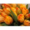 Продам тюльпаны к 8 марта и 14 февраля